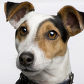 jackrussell's Avatar